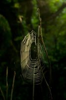 spiderweb in sunlight - stock by AngiWallace