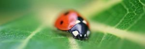 Lady Bird V by Z0hra