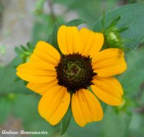 Yellow Flower IV by Andrew-Bowermaster