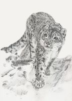 Snow Leopard by Tannalein