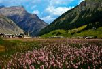 Summer in the Alps by Firebloom