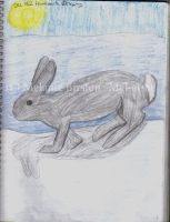 Artic Hare by Mel-at-ne