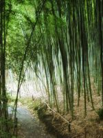 Bamboo Trail Stock by designdiva3