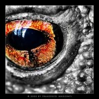 Daemon's Eye by Triagon