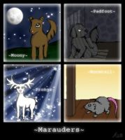Marauders by triola
