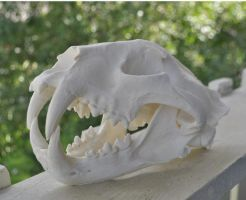 Hand Made African Leopard Replica Skull by MorRokko