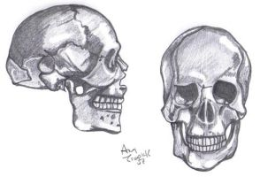 Skull Drawing by sassylilmommie
