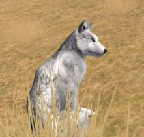 Pepsi in Wolf Quest2 by Pepsi15