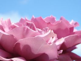 The Rose Called Blue Sky by iRISSIEL