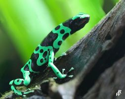 Long necked frog by Dwarf4r