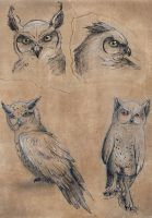 Just some Owls by Kanizo