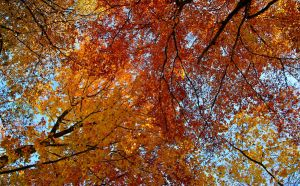 Autumn Leaves by Noemy009