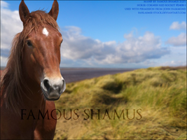 Suffolk07 by FamousShamus109