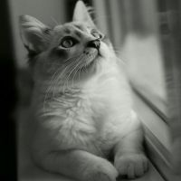 Cat 9 by WorldInPictures