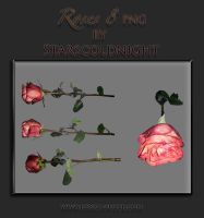 Roses Png 8 By Starscoldnight by StarsColdNight