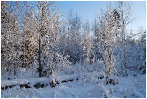 Winter Afternoon 18 by Eirian-stock