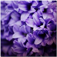 Easter Sunday by BusyBeePhotography