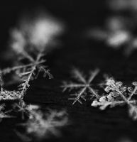 SNOWFLAKES by MurphyL6