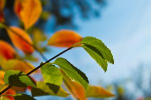 Leaves contrast by sztewe