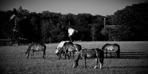 Evening Pastoral Scene by Pennes-from-Heaven
