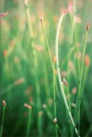 water grasses by whimsicalchaos
