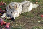 Among the Apples by InaWolfsimage