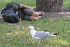 Seagull Eating Chicken 2 by Miss-Tbones
