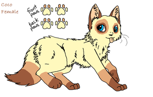Adoptable-Will be traded by converse-kitten