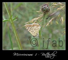 Microcosmos 1 - Butterfly by iFab