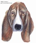 Basset hound. by VeIra-girl