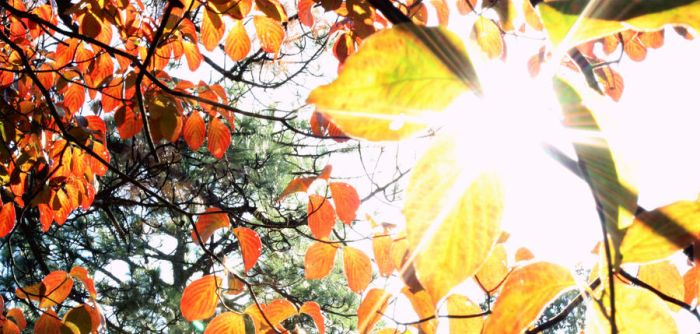 Fall by Emillemily