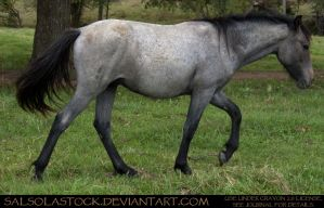 Bay Roan Yearling 3 by SalsolaStock