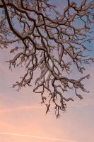 Snowy Branch by tpphotography