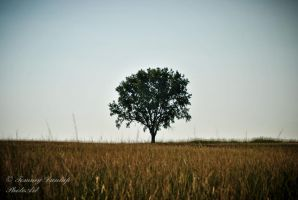 tree in field by Tommy8250