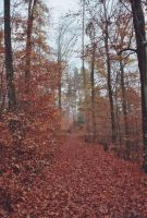 Odenwald Forest 05 by engineerJR