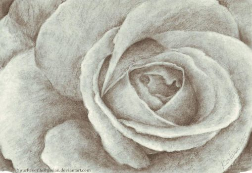 1289 Charcoal Rose by YourFavoriteRussian