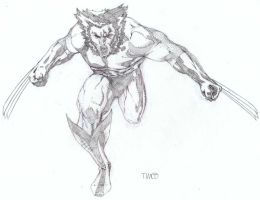 Wolverine on the attack by timothygreenII