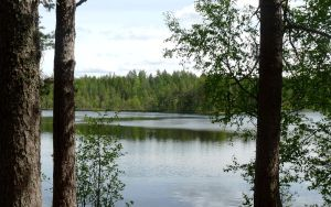 Lake + Trees (Finland) by Anri82