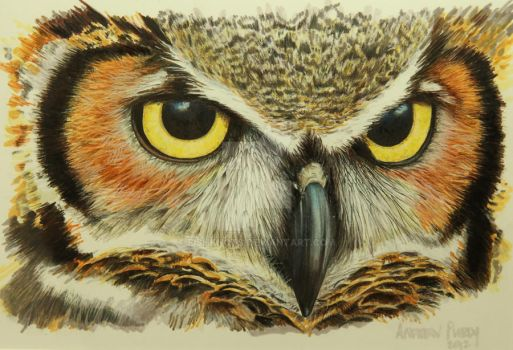 Great Horned Owl by Fishknots