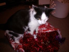 Pilchard the tinsel king by fireman5