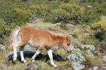 Brown Foal Stock 3 by GrayeyesStock