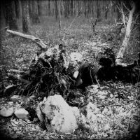 The Roots of a Tree 9 by Jude-Monteleone