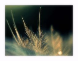 feather by Bodghia