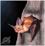 Pallid Bat Speed Painting by shorty-antics-27
