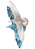 Ice Gull by harpyja