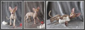 Sphynx Cat #3 of limited edition by LimitlessEndeavours