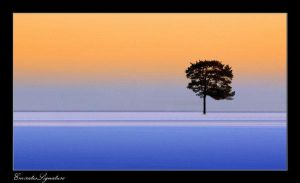 The Tree . . . by EmiratesSignature