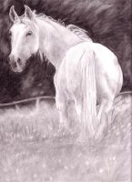 White Horse by LindseyTaylor