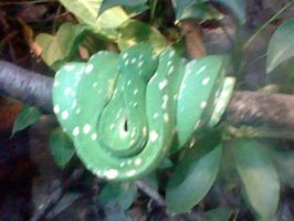 Tree Boa by SNlCKERS