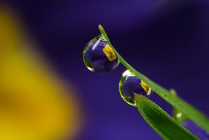 Dew Drop Refractions 8 by Alliec